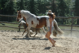 Driedaagse grondwerktraining met paarden ~ Pure and Authentic body communication ~