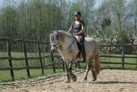 Driedaagse rijtraining met paarden ~ Sensitive and Connected riding ~